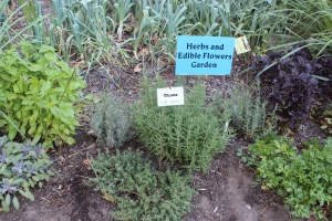 Edible herb garden at state capital, Madison WI.